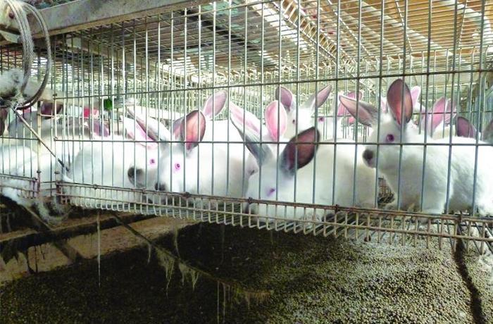 #EndTheCageAge: el caso de los conejos