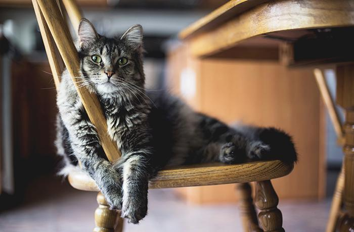 ¿Qué hacer con los gatos en vacaciones?