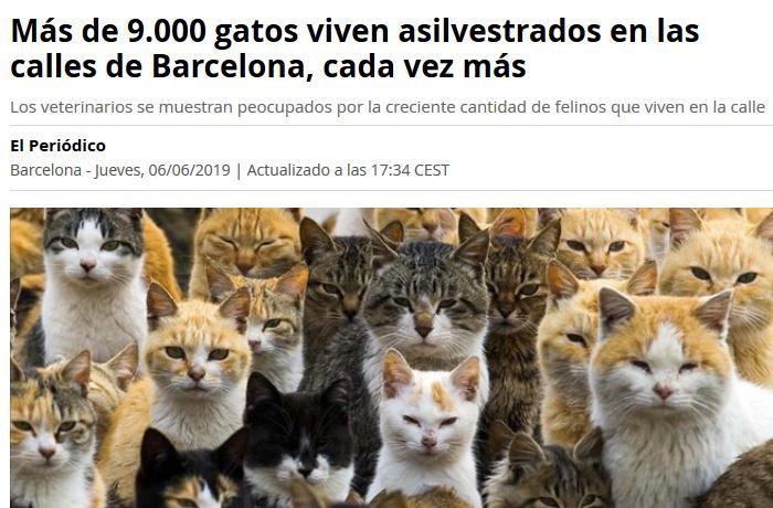Noticias que desinforman, provocan alarma y fomentan la animadversión hacia los gatos ferales