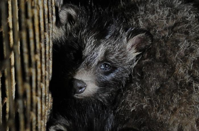 #FurFreeEU: todos los porqués de la campaña