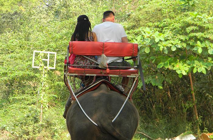 Paseos en elefante: todo lo que necesitas saber