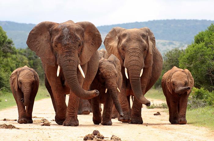 Presionamos a la UE para poner fin a la captura en vivo de elefantes