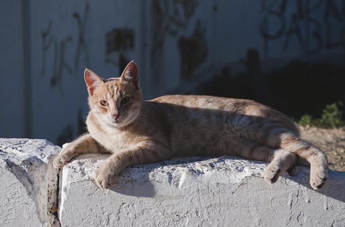 Colonias de gatos: responsabilidad y cuidados