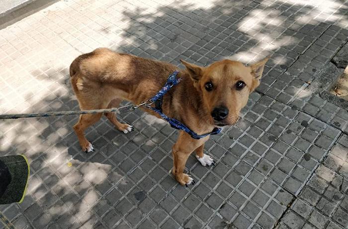 Logramos una sentencia pionera en el caso de un perro maltratado