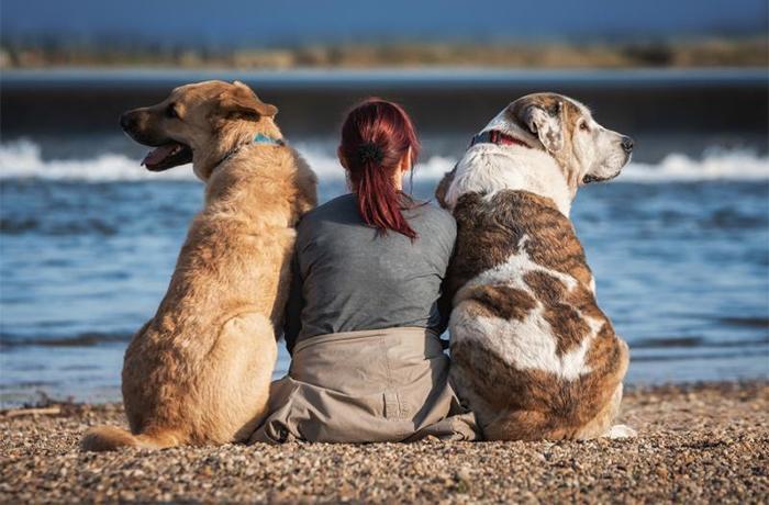 Incluimos mujeres y animales víctimas de violencia machista en el proyecto #MejoresAmigos