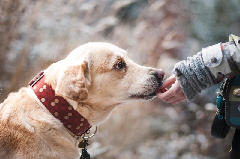 #ConoceALosPerros: campaña informativa para entender a los compañeros caninos