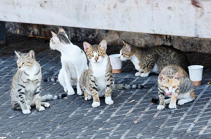 Necesitamos voluntarios urgentemente para colonia de gatos en Montcada-Reixach