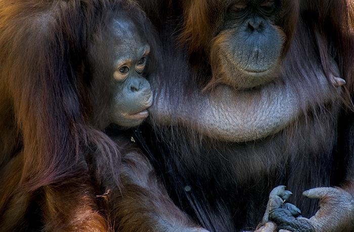 Situación caótica de los zoos en las Islas Canarias