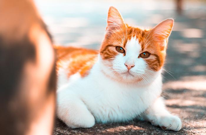 Nada confirma que tu gato pueda infectarte con el nuevo coronavirus