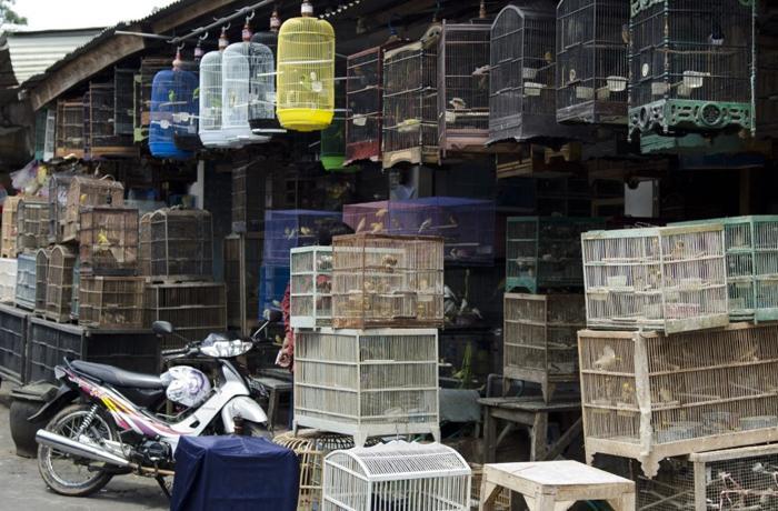 Junto a 240 entidades pedimos a la OMS que se prohíban los mercados de fauna silvestre