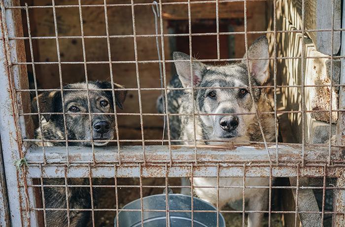 Los refugios de animales, al borde del colapso en toda España