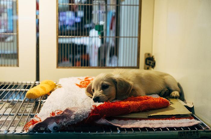 Denunciamos varios casos de venta de animales enfermos por Internet