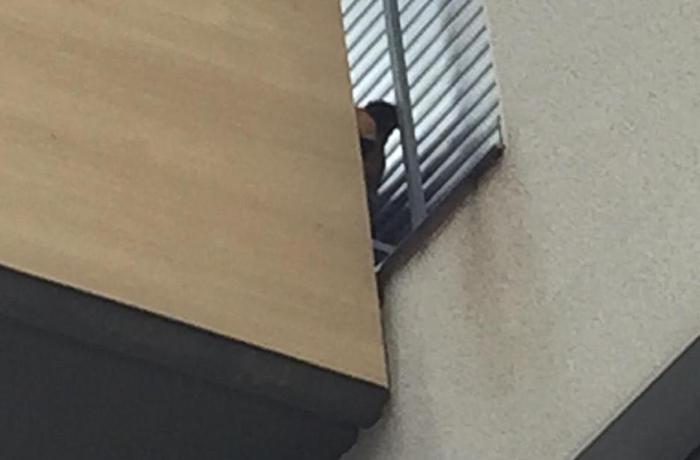 En Sant Cugat del Vallés un perro lleva casi un año encerrado en un balcón