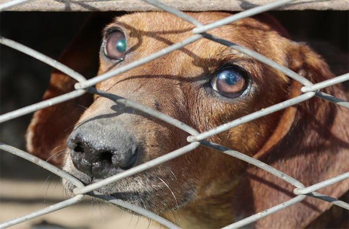 Es oficial: China prohíbe el consumo de perros y gatos