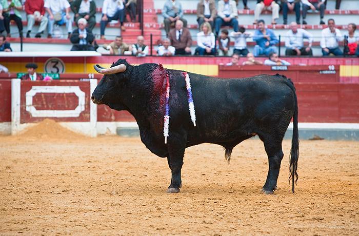 La presidenta de la Comunidad de Madrid propone matar 6 toros como homenaje a los sanitarios