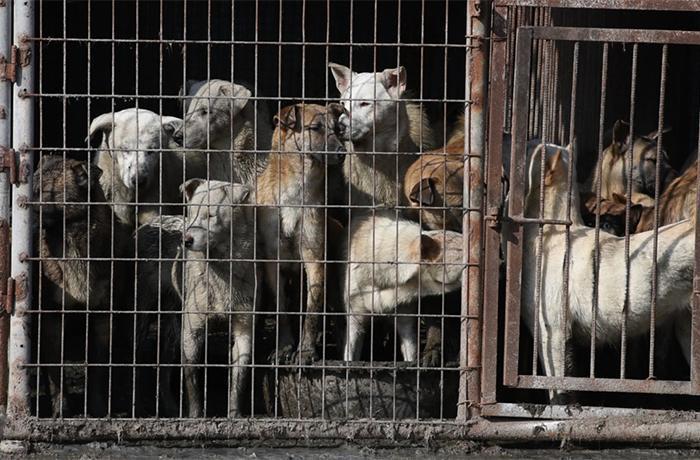 Se pone en marcha el festival de Yulin pese a la nueva legislación