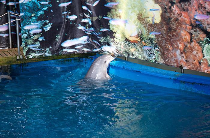 Comunicado de FAADA sobre el traslado de los delfines de Barcelona al Attica Zoological Park