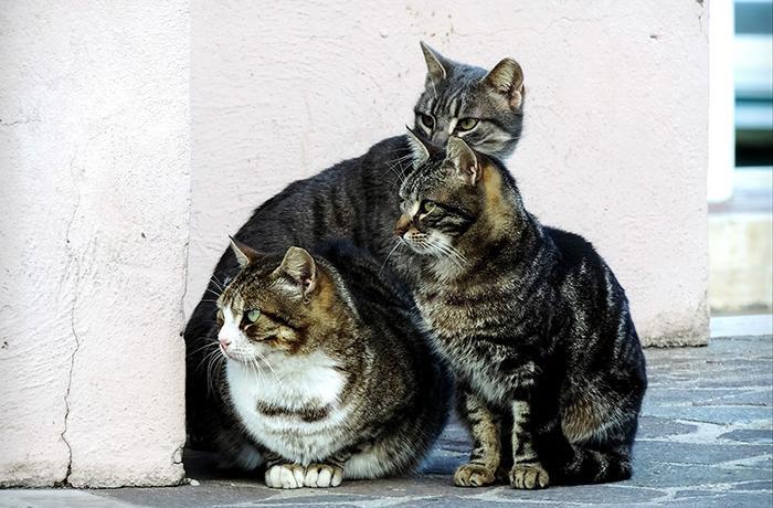 Reubicaciones de colonias felinas: todo lo que necesitas saber