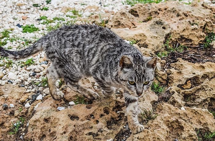 El Ayuntamiento de Platja d'Aro avisa con multar a quién alimente a gatos ferales