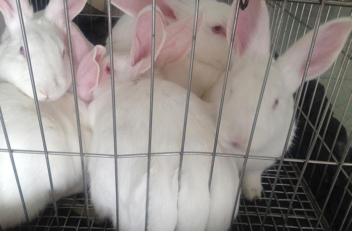 Australia prohíbe la experimentación animal para productos cosméticos