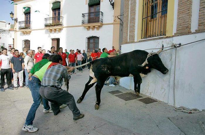 Desde Prou Correbous nos oponemos a las ayudas al sector taurino desde la Diputación de Tarragona