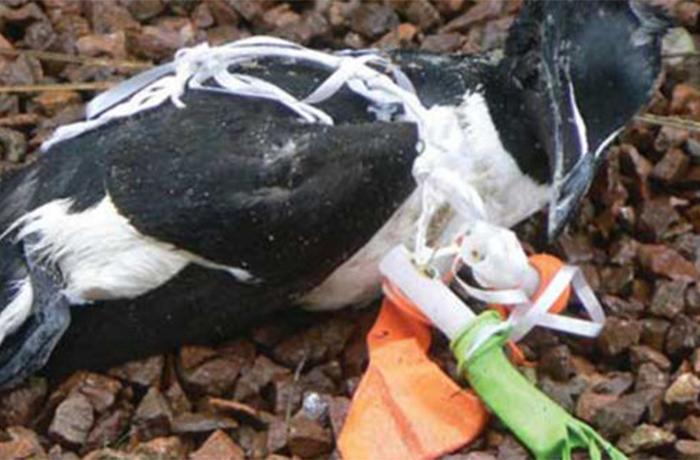 Los globos son la primera causa de muerte de las aves marinas