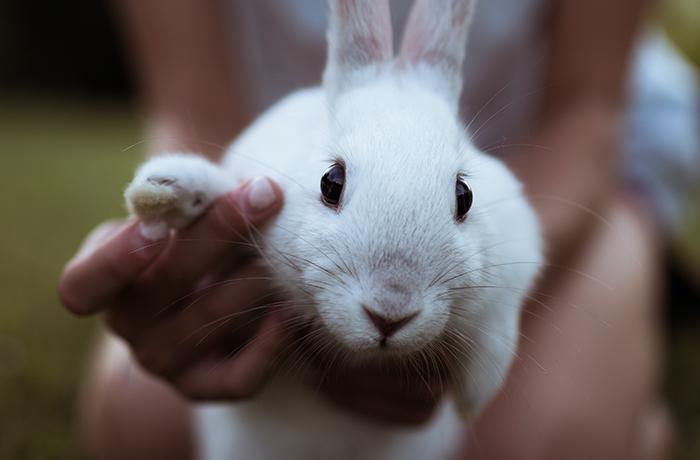 Cómo detectar si tu conejo está enfermo