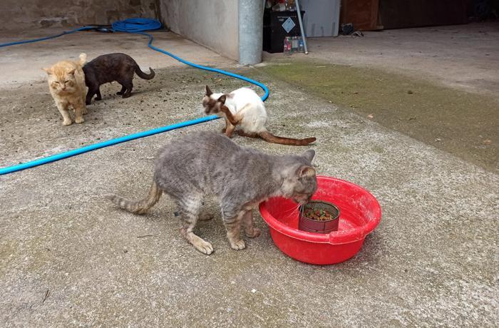 ¡Necesitamos tu ayuda para costear el rescate de 6 gatos!