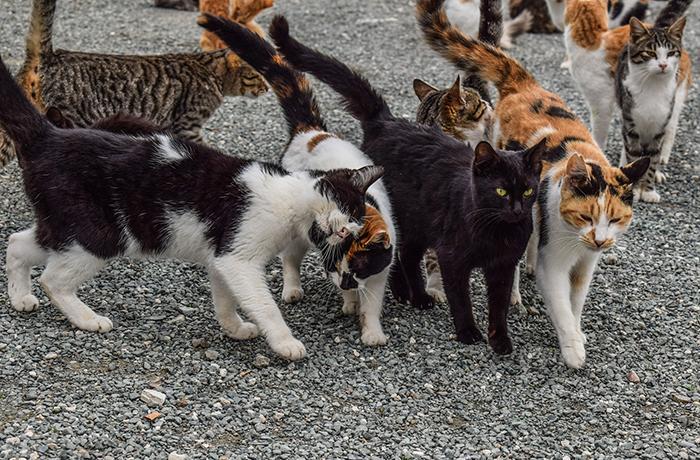 Colonias felinas: descarga la guía actualizada para su manejo