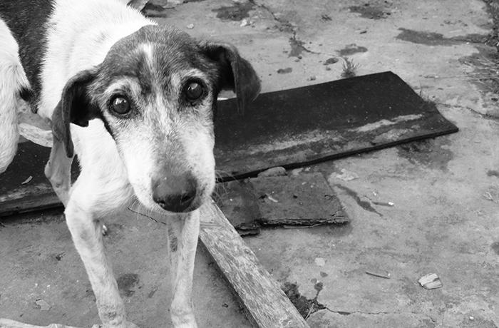 Denuncia de FAADA por el abandono de dos perros en un piso