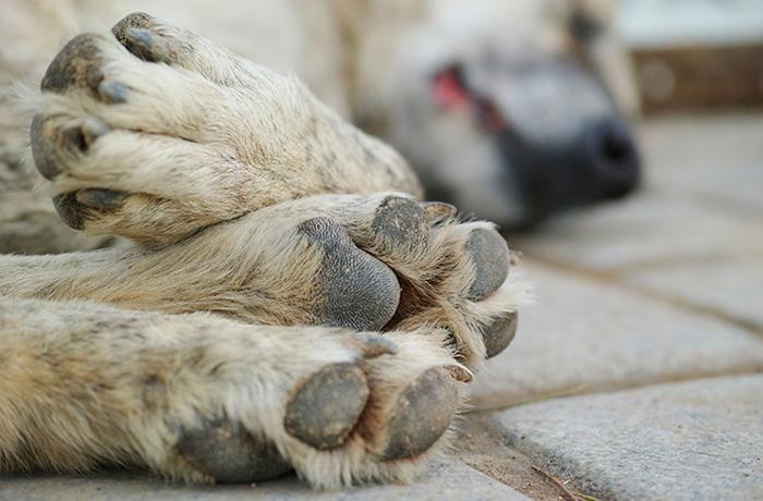 Ayúdanos a llevar a los asesinos de un perro maltratado ante la justicia
