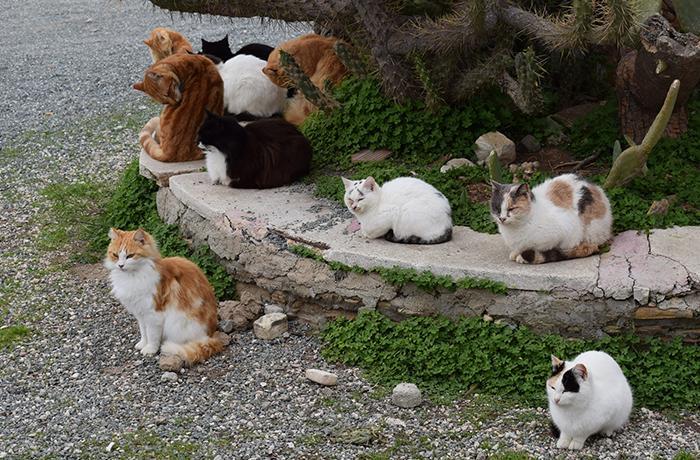 Se necesita voluntario para alimentar colonia de gatos
