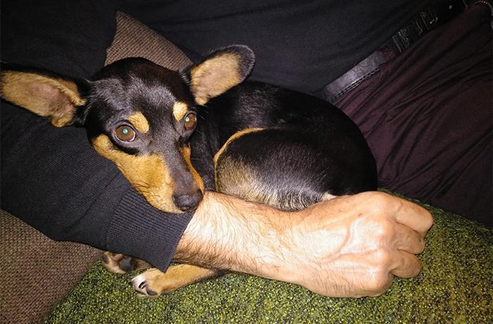 """3.000 euros de multa y 2 años de inhabilitación para el """"educador"""" que provocó la muerte de un perro"""