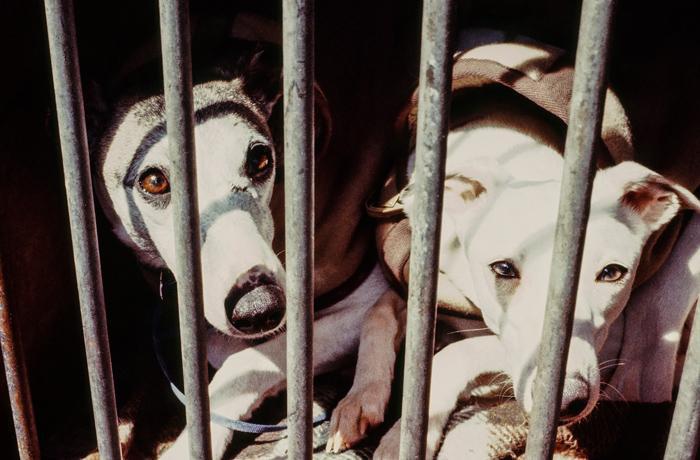 Denunciamos a la Generalitat de Catalunya por presunto incumplimiento de la normativa que protege a los perros de los cazadores