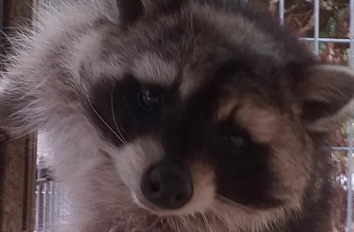 ¡Urgente! Ayúdanos a evitar el sacrificio de Arya, Susi, Lolo, Pipa y muchos más animales