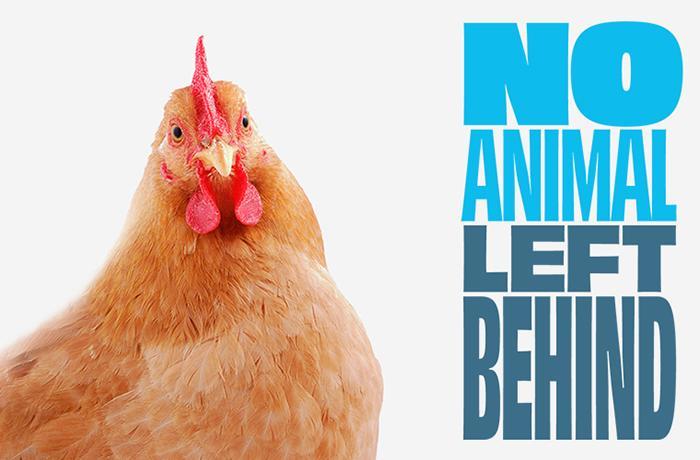 #NoAnimalLeftBehind: el 2021 puede marcar un antes y un después en la legislación europea sobre animales considerados de granja