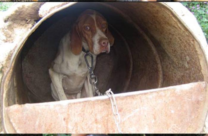 Decomisados 50 perros en muy mal estado en el municipio de Alós