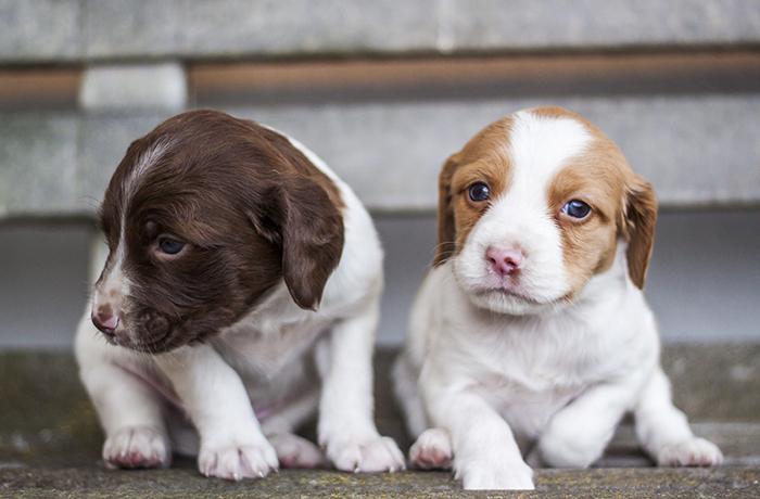 30 cachorros necesitan un hogar