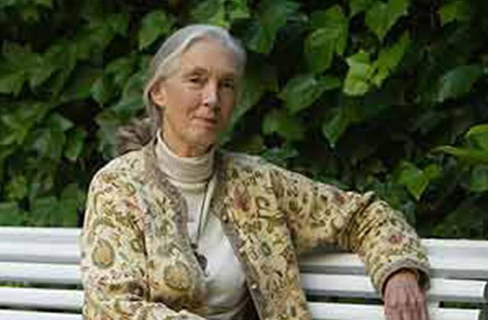Goodall pide el Nobel para los científicos que no experimentan con animales
