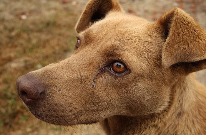 Hallados muertos una decena de perros de caza en Fuerteventura tras ser abandonados