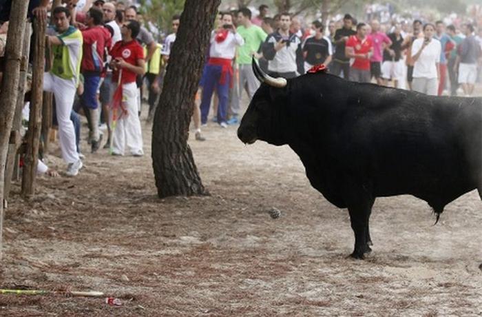 600 personas se manifiestan contra el Toro de Vega en Tordesillas