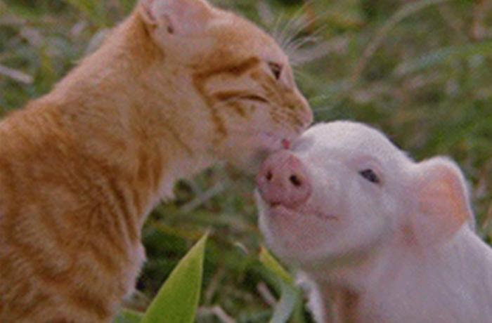 Marca una importante diferencia para los animales