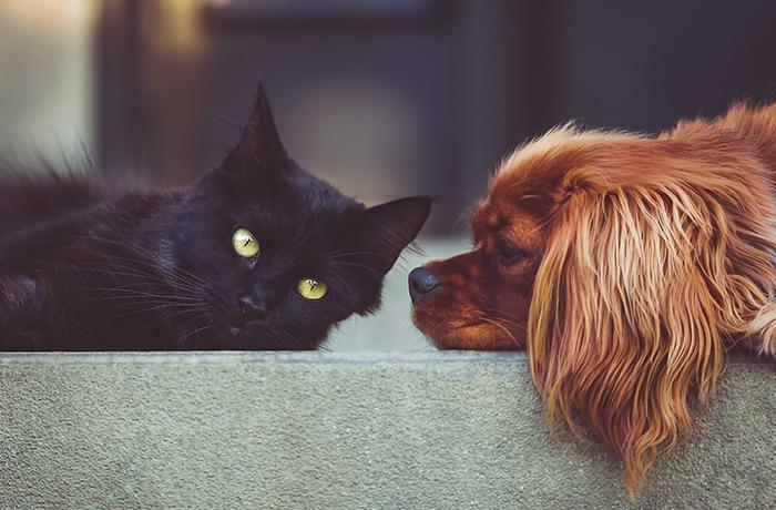 Europa prohíbe la importación y exportación de piel de perro y gato