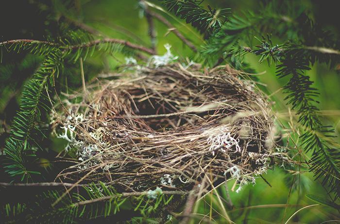 La UE amenaza con una multa millonaria a la Generalitat por desproteger a las aves