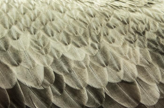 Ikea devolverá el dinero a los compradores de ropa de cama rellenada con plumas de aves vivas
