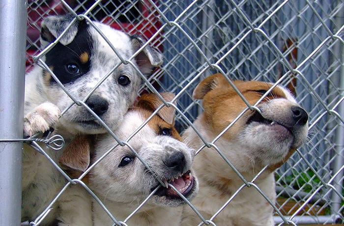 150 entidades piden que se apruebe ya la nueva perrera