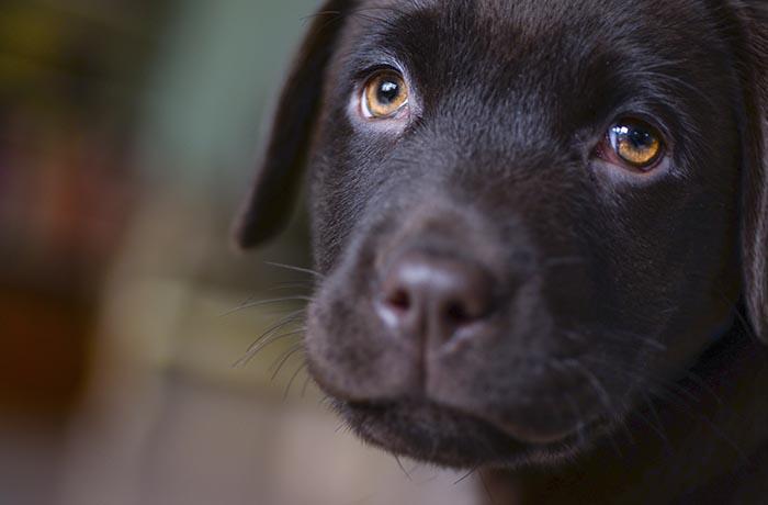 Cierran la perrera de Vilanova, ayuda con urgencia