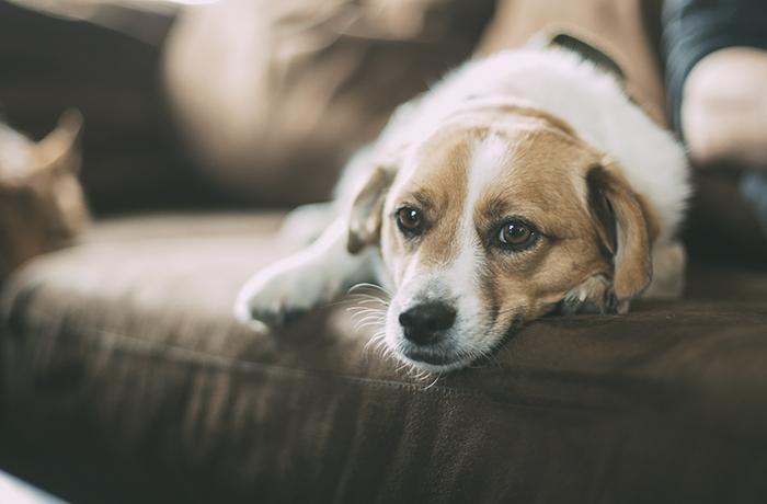 3r concurso de perros sin raza de APAP