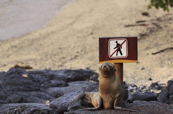 Victoria para las focas