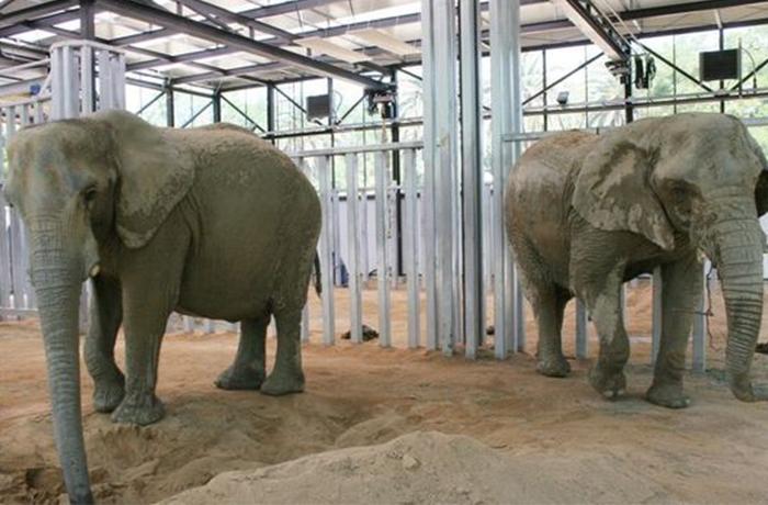 La Reina intercede por la elefanta Susi